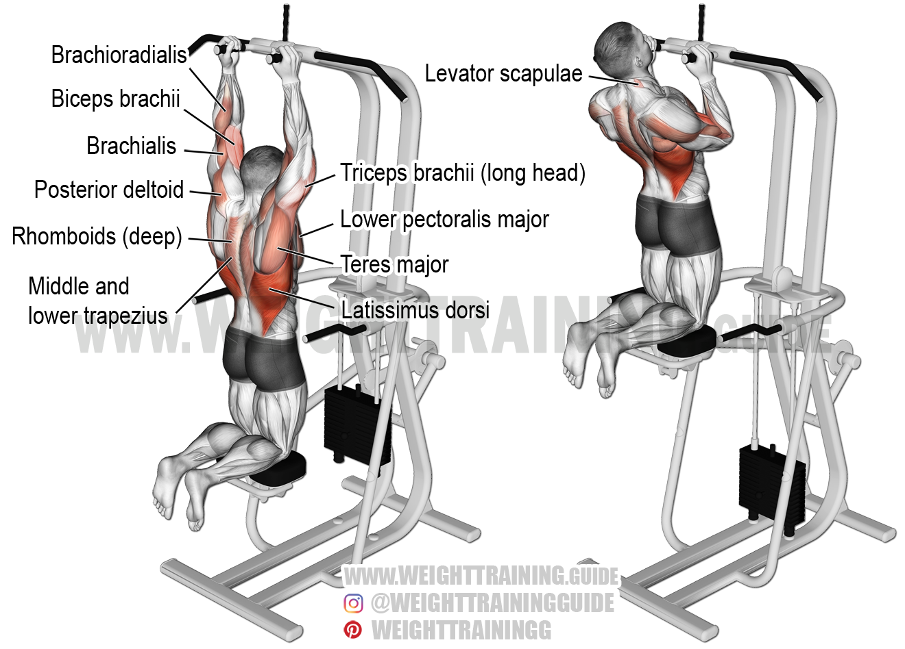proper gym guide back shoulders and chest