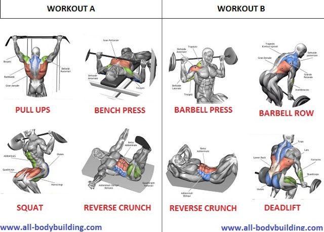 routine for muscle building exercise a complete guide