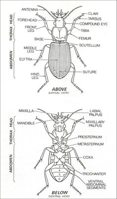 scientific names of insects with pictures pdf
